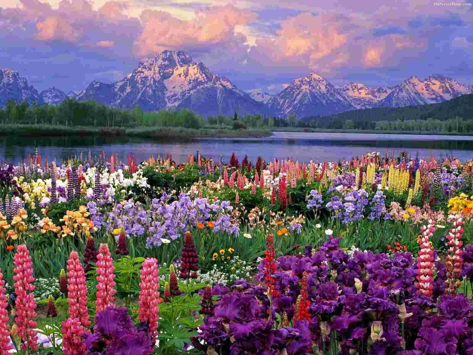 Grand Teton National Park Google Search Latitude For