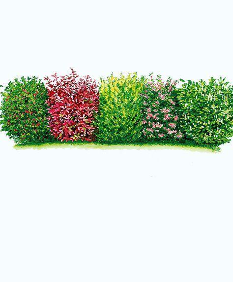 Blatthaltende Hecke | Bäume & Sträucher | Bakker #immergrünesträucher
