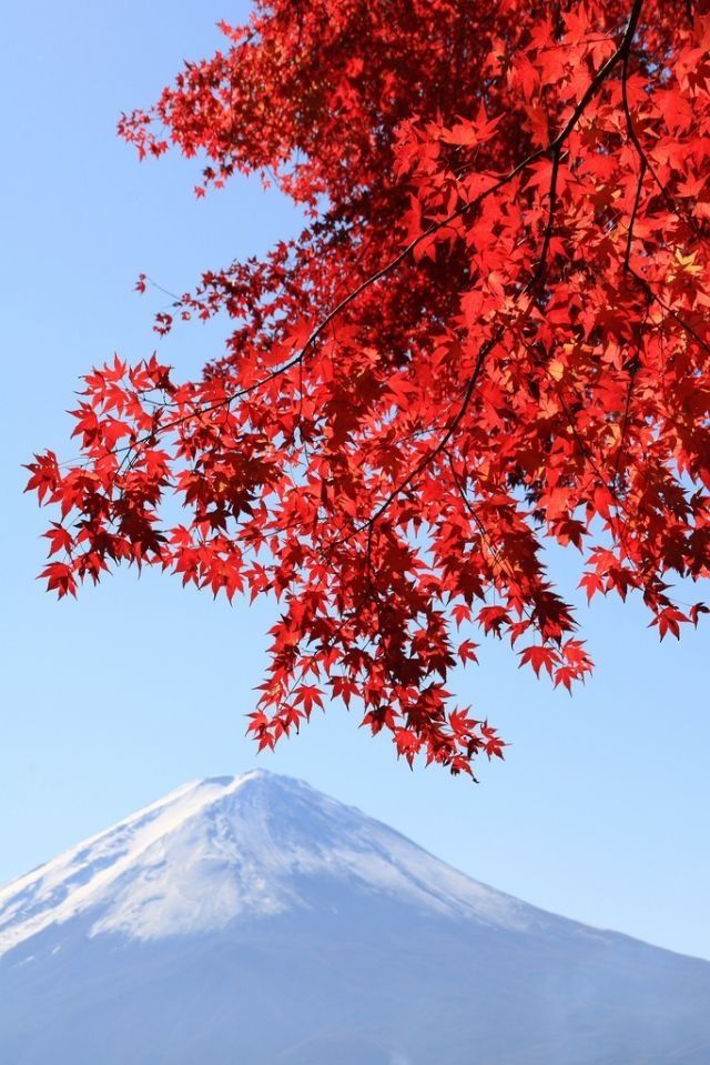 Autumn Scenic views, Fuji, Wonders of the world