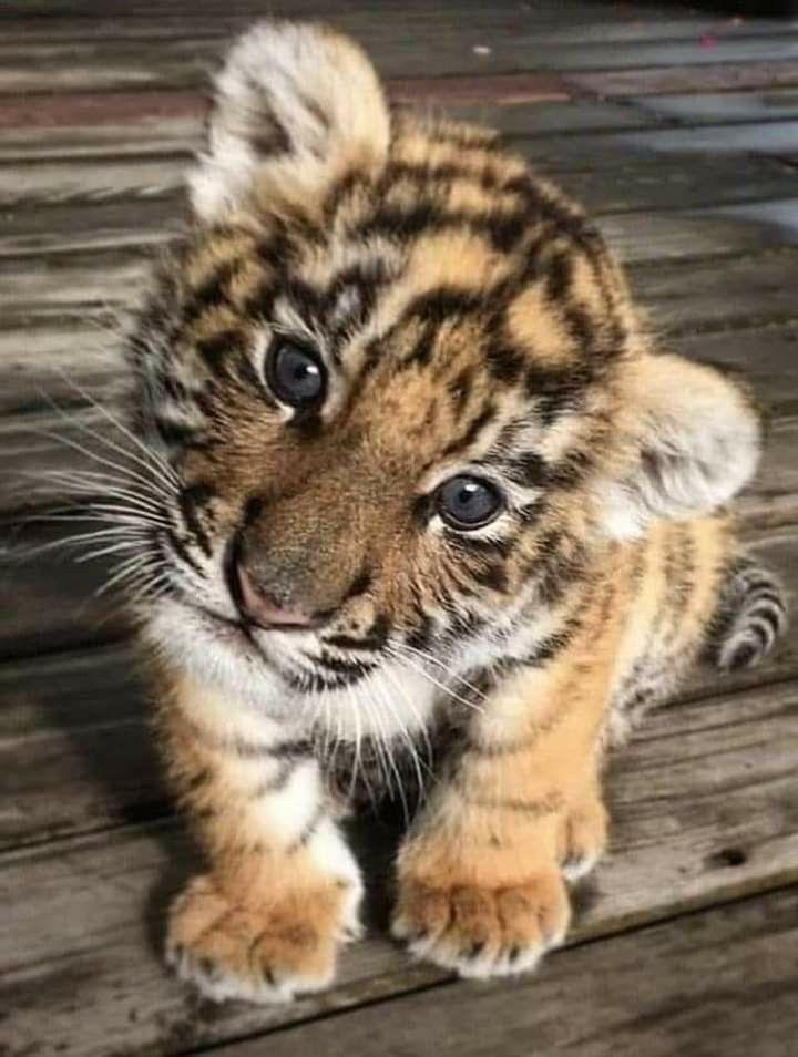 - animales bonitos - #animales #bonitos #amazing animals
