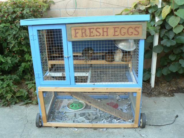 Rabbit hutch converted into a chick brooder for someday for How to make a rabbit hutch from scratch