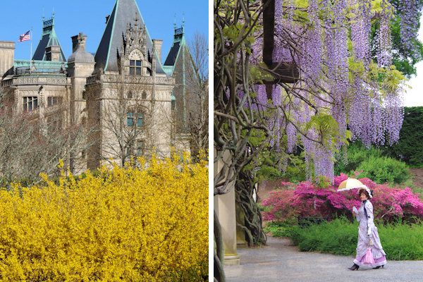 Biltmore spring flowers biltmore road trip pinterest north see tulips and enjoy special events and ticket specials at the biltmore blooms festival of flowers held each spring in asheville north carolina mightylinksfo