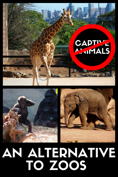 An Alternative To Zoos To Stop Keeping Animals Captive Sustainable Travel Animals Zoo