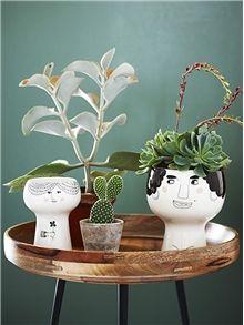 Trendikkäimmät huonekasvit: 1. Mehikasvit