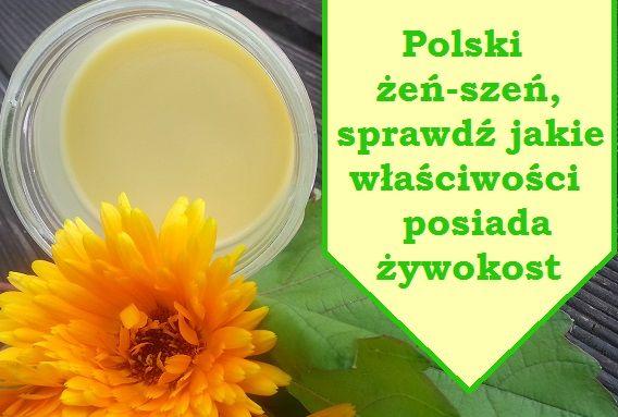 Polski Zen Szen Zywokost Symphytum Officinale L Health And Beauty Health Food