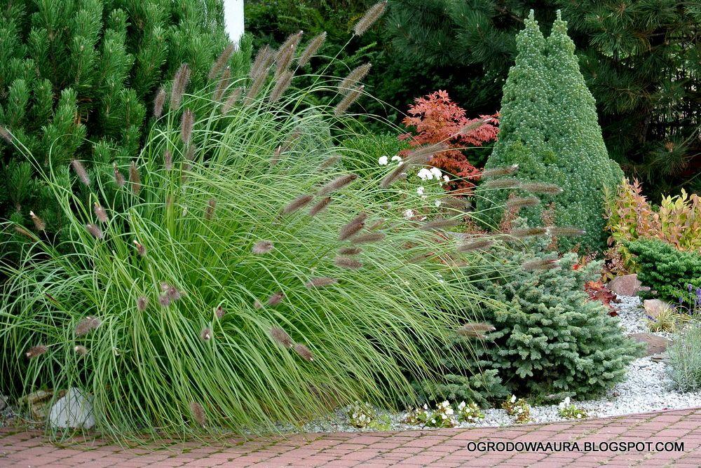 O Ogrodach Na Zdjeciach Pazdziernika 2014 Plants 10 Things
