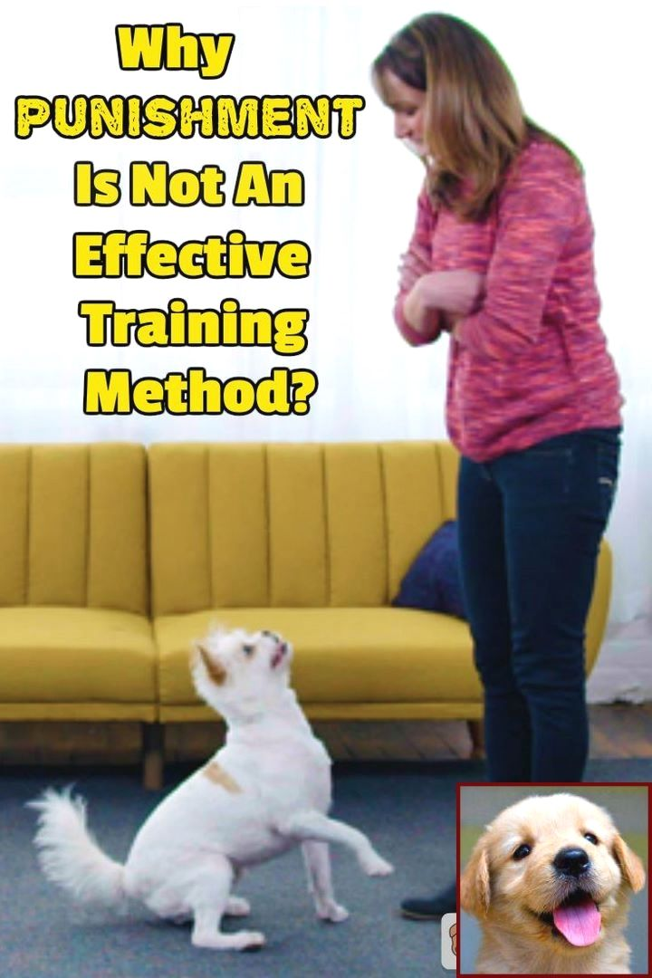 House Training A Husky Puppy And Clicker Training Dogs Fetch