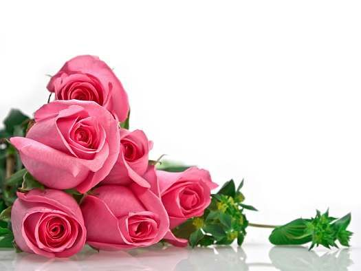 Birthday Cards Rose Flower Wallpaper Pink Rose Bouquet Flower Wallpaper