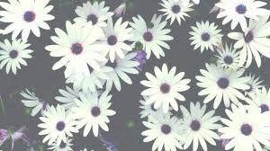 Resultado De Imagen Para Imagenes De Flores Tumblr Para Portada
