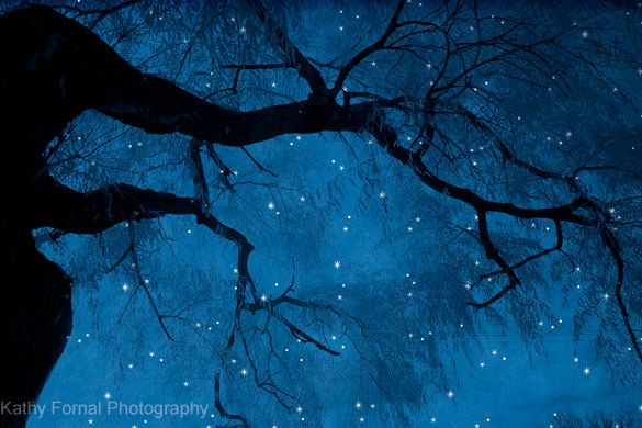 Nature Photography Surreal Starry Dark Blue Nature Landscape Photos Blue Haunting Spooky Nature Photography Fantasy Landscape Mountain Landscape Photography
