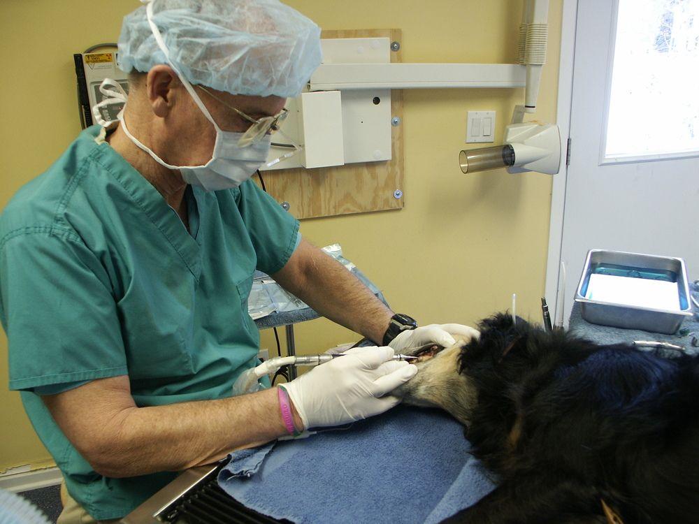 Dr colmery dixboro veterinary dental clinic dental