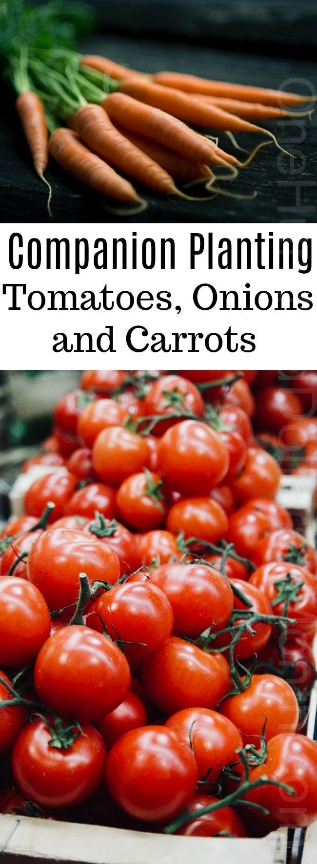 Companion Planting Tomatoes Onions And Carrots 400 x 300