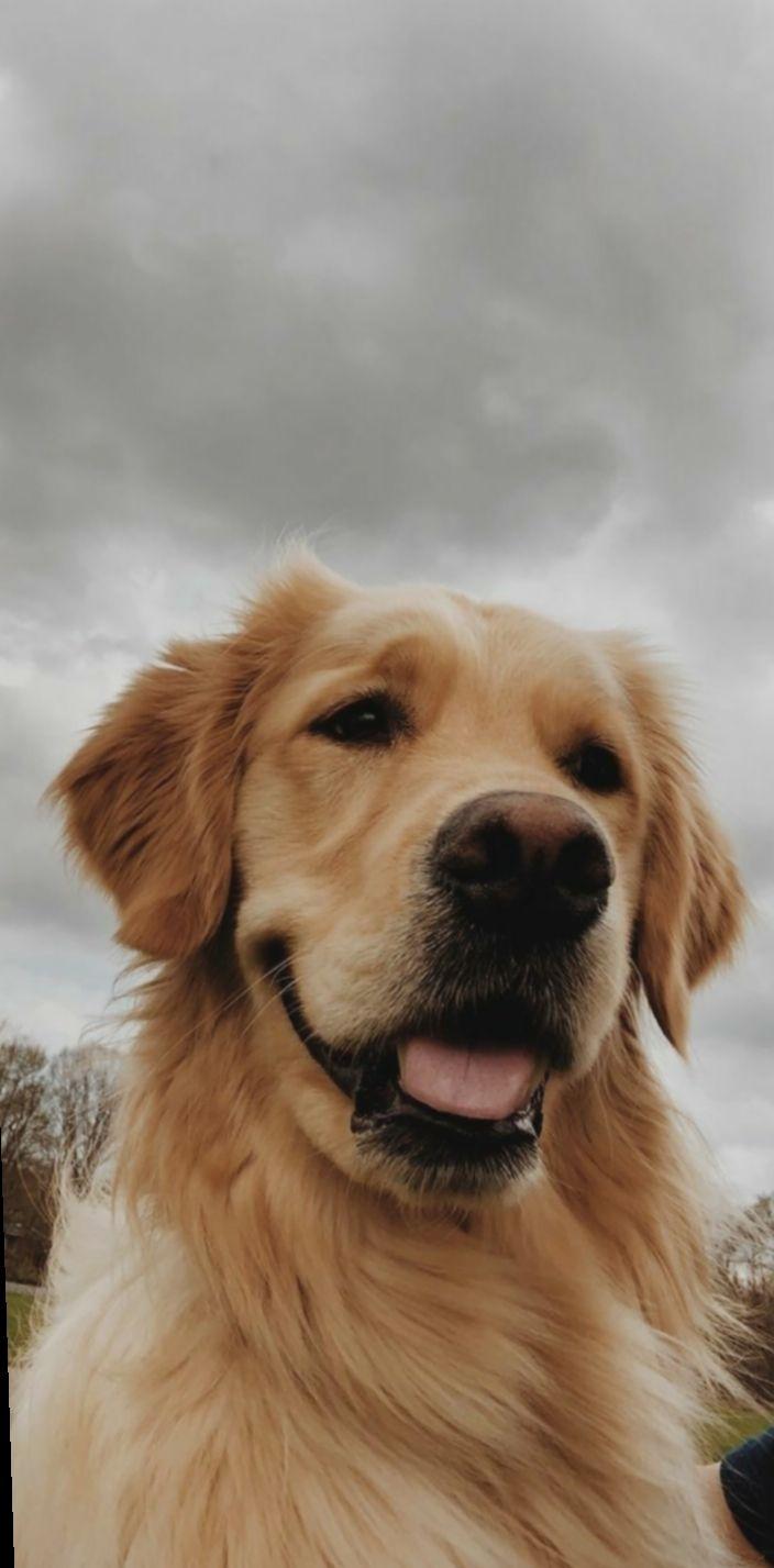 Cute Dogs Photography Puppies Aderitacristina Miniensaio Miniensaiodiadascriancas Cute Dog Wallpaper Dog Wallpaper Dog Pictures