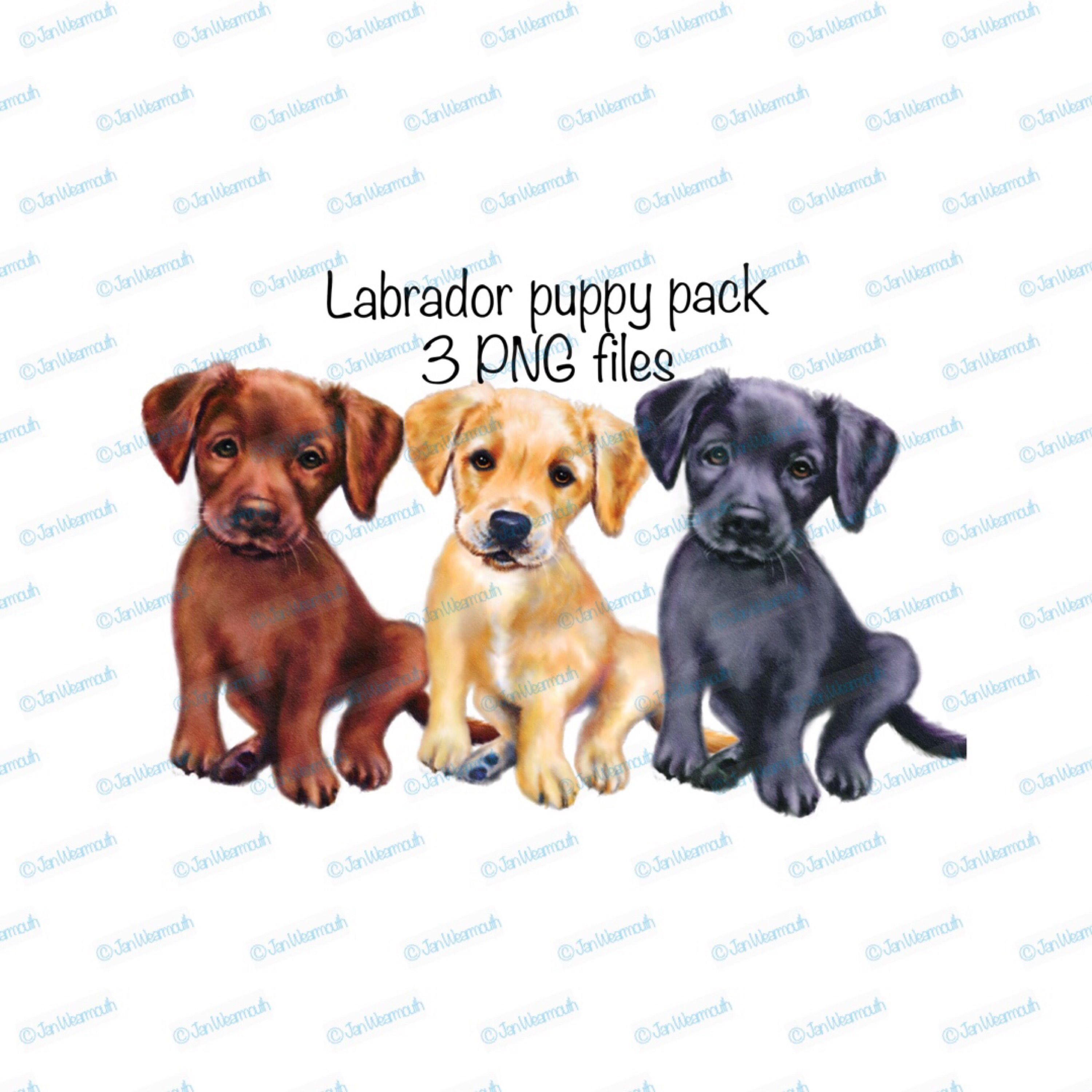 small resolution of puppy clipart labrador dog set instant download png files transparent background commercial printable