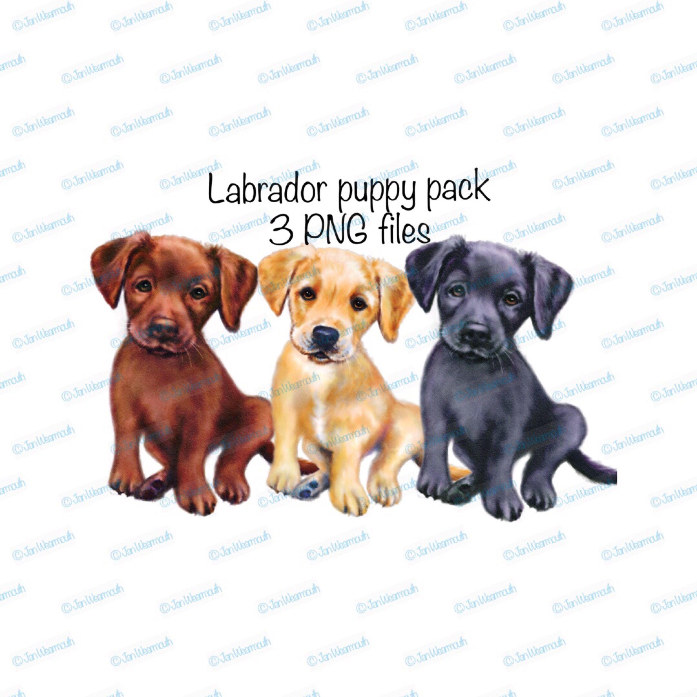 puppy clipart labrador dog set instant download png files transparent background commercial printable [ 3000 x 3000 Pixel ]