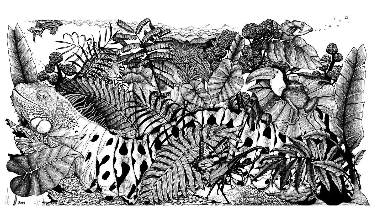 Image Cameleons Et Lezards Coloriage Difficile Jungle Animaux 1