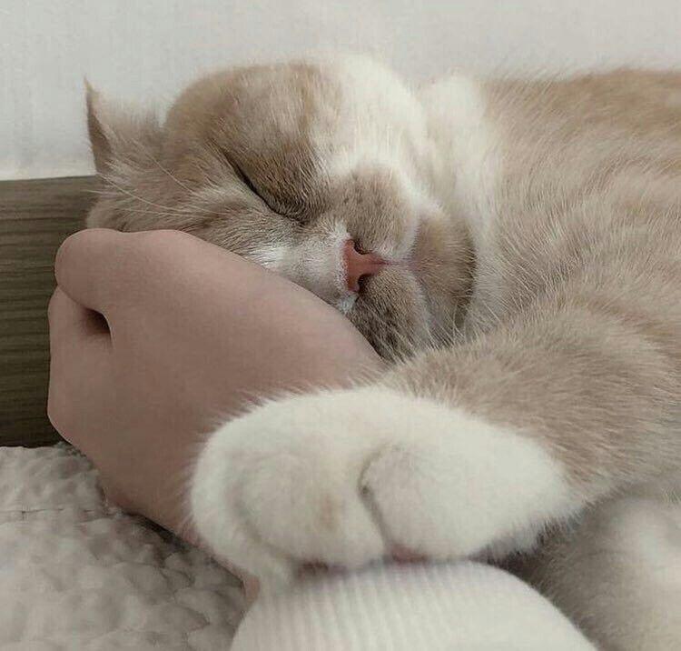 もふもふの癒し W おしゃれまとめの人気アイデア Pinterest Kezban 子猫 かわいいペット かわいい子猫