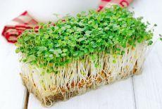 Zázračnú bylinku vypestujete aj za oknom. A je výborná pre vaše zdravie (+recepty)