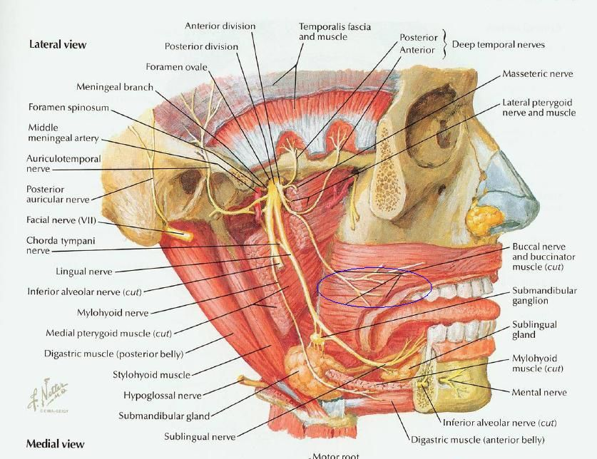 Pin By Lilaclillies On Nbde Part I Pinterest Dental Anatomy And