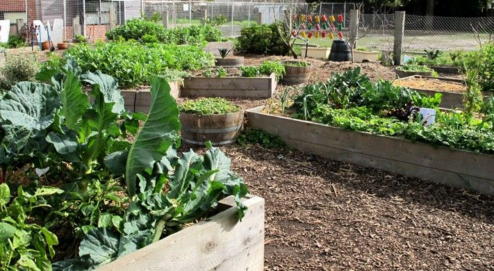 Spring Garden Workshops For Successful Kitchen Gardens News