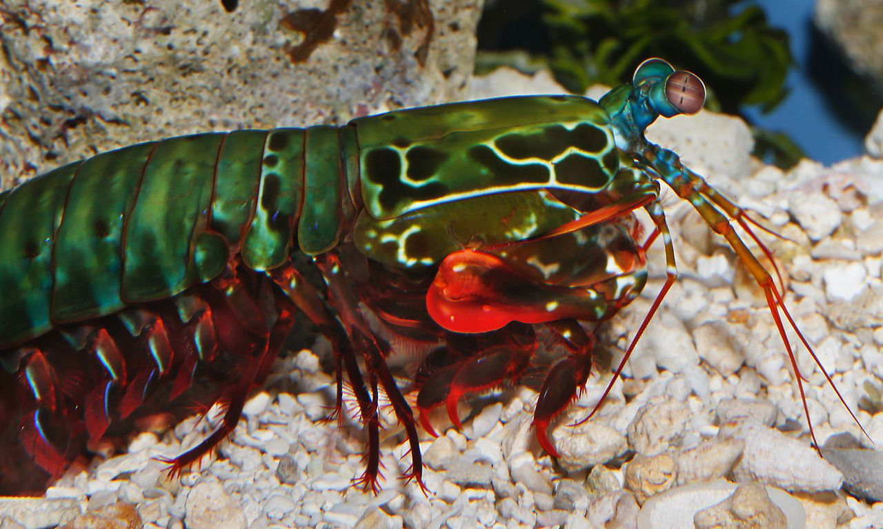 To acquire Shrimp mantis breaking glass gif picture trends