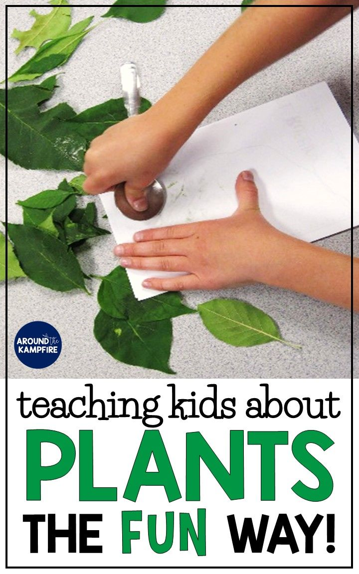 Plant Life Cycle Activities-Fun, Hands-on Science for Kids - Around the Kampfire