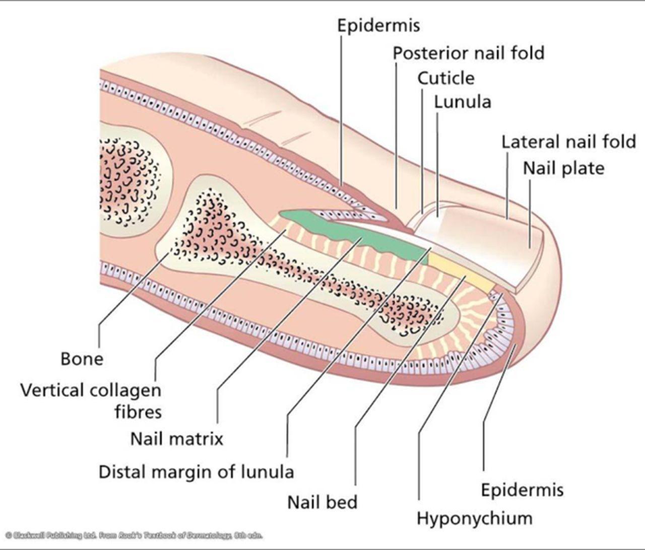 Pin By Aca Aca On Anatomy Pinterest Medicine