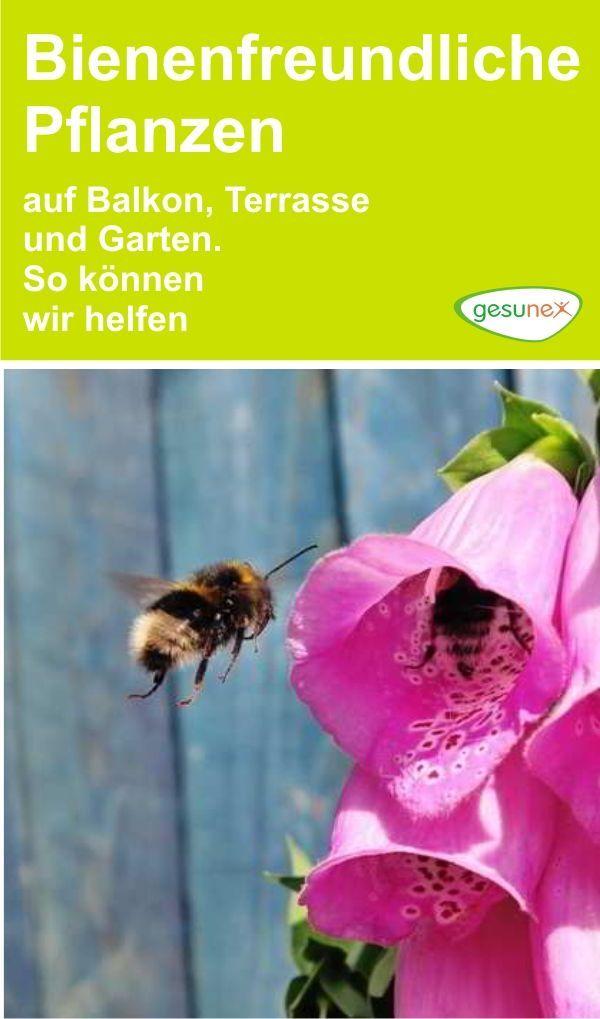 Bienenfreundliche Pflanzen Auf Balkon Terrasse Und Garten So Konnen Wir Helfen Auf Balkon Balcony Plants Bee Friendly Plants Potted Plants Patio Ideas