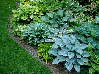 Hosta Beds | by RHR Horticulture