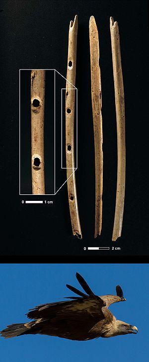 cr magnon pal olithique sup rieur 42 000 ans bp mus e de toulouse on a trouv dans la grotte. Black Bedroom Furniture Sets. Home Design Ideas