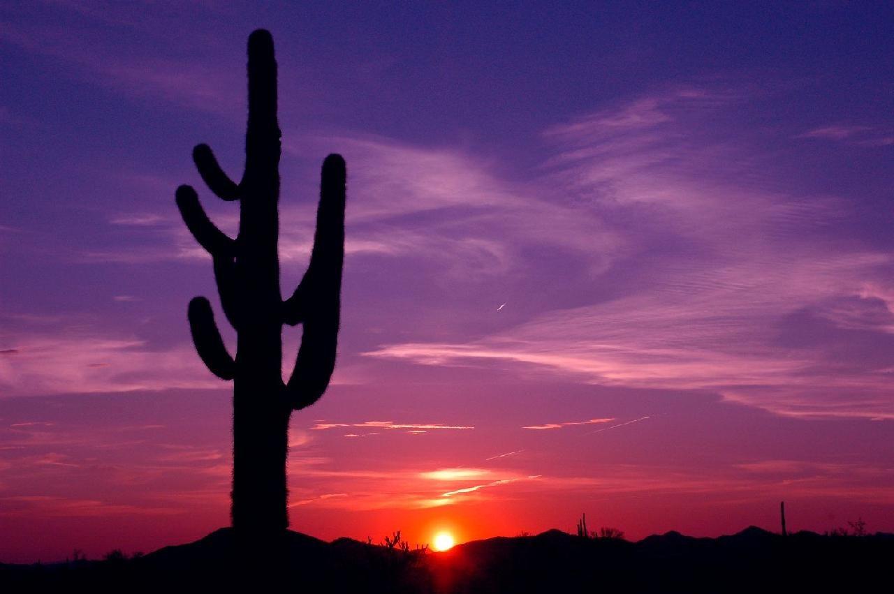 Arizona Sunset Amp Arizona Sunrise Pictures Arizona Sunset Sunrise Pictures Sunset Pictures Hd wallpaper cacti evening sunset desert