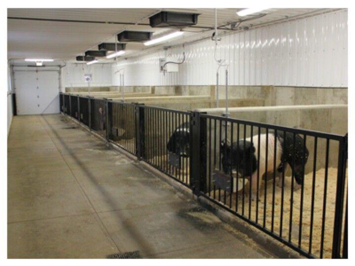Pens, Barn And Livestock