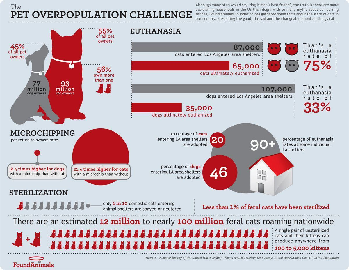 Please Share This Infographic On The Pet Overpopulation Challenge