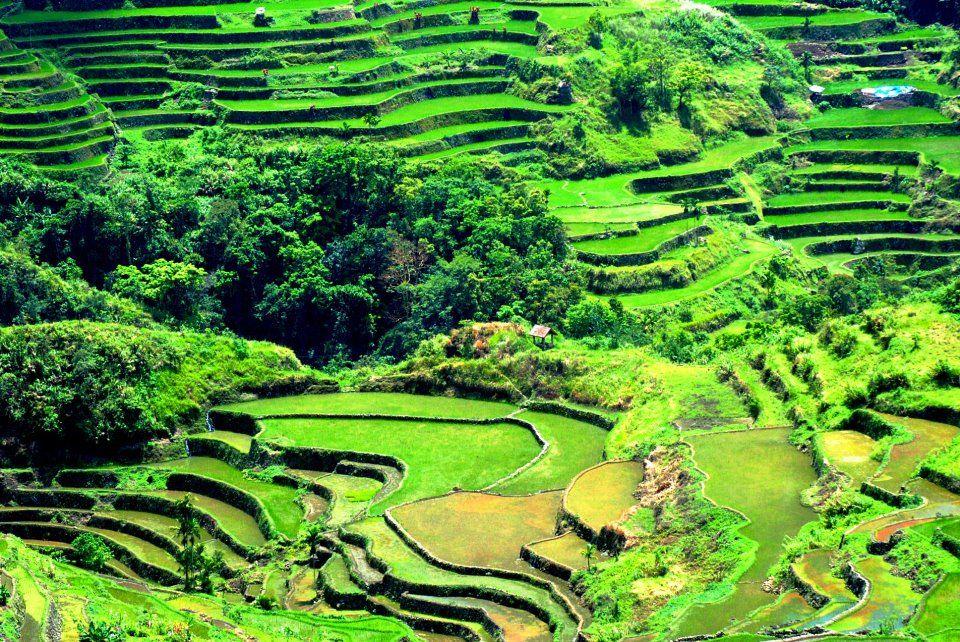 Hagdan Hagdang Palayan Descriptive Essay - image 6