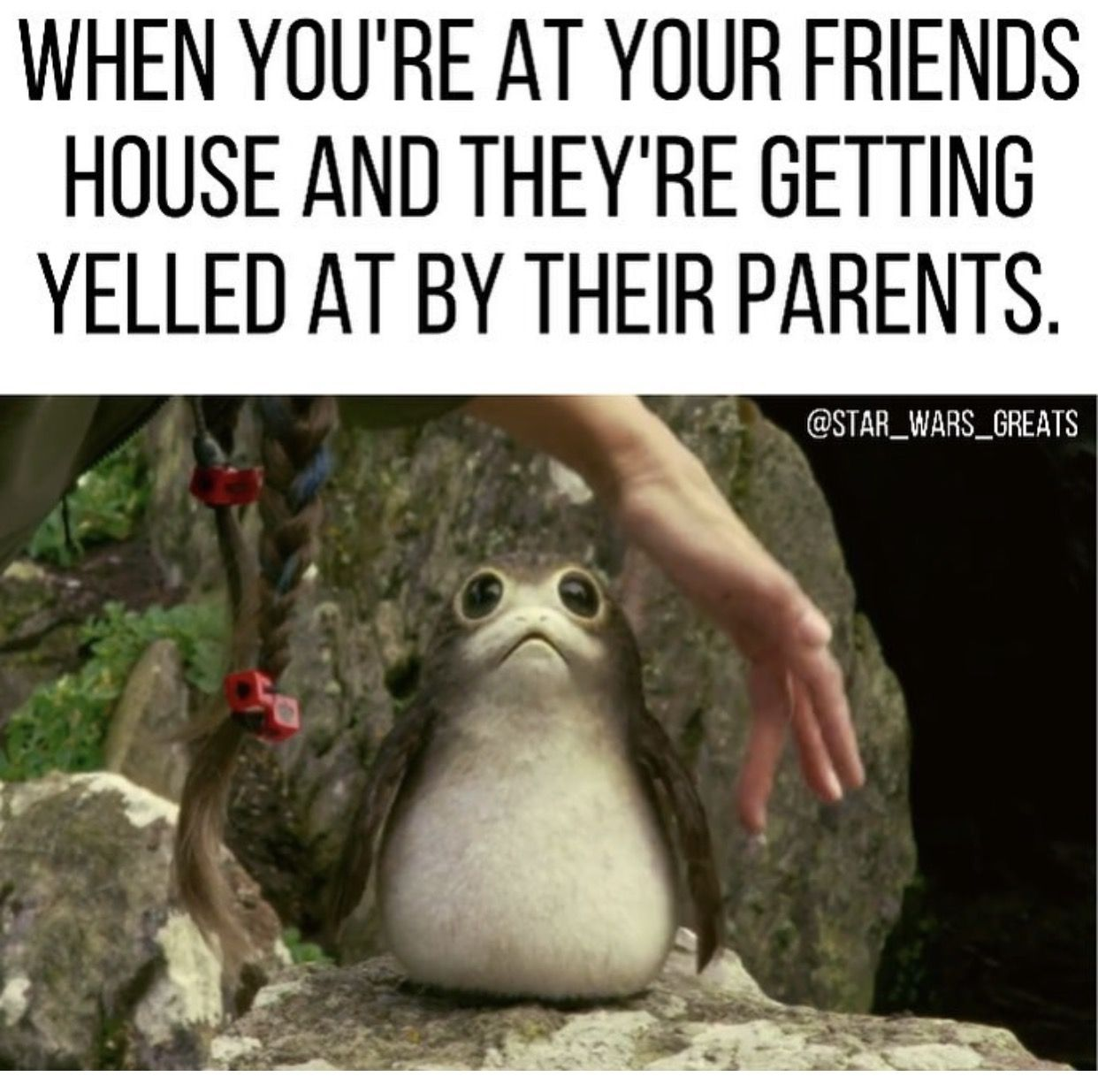Porg Meme Star Wars Jokes Funny Star Wars Pictures Star Wars Humor