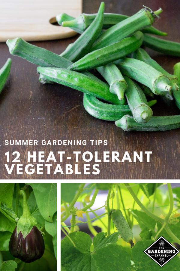 12 Heat Tolerant Vegetable Plants for a Summer Garden – Summer vegetables garden