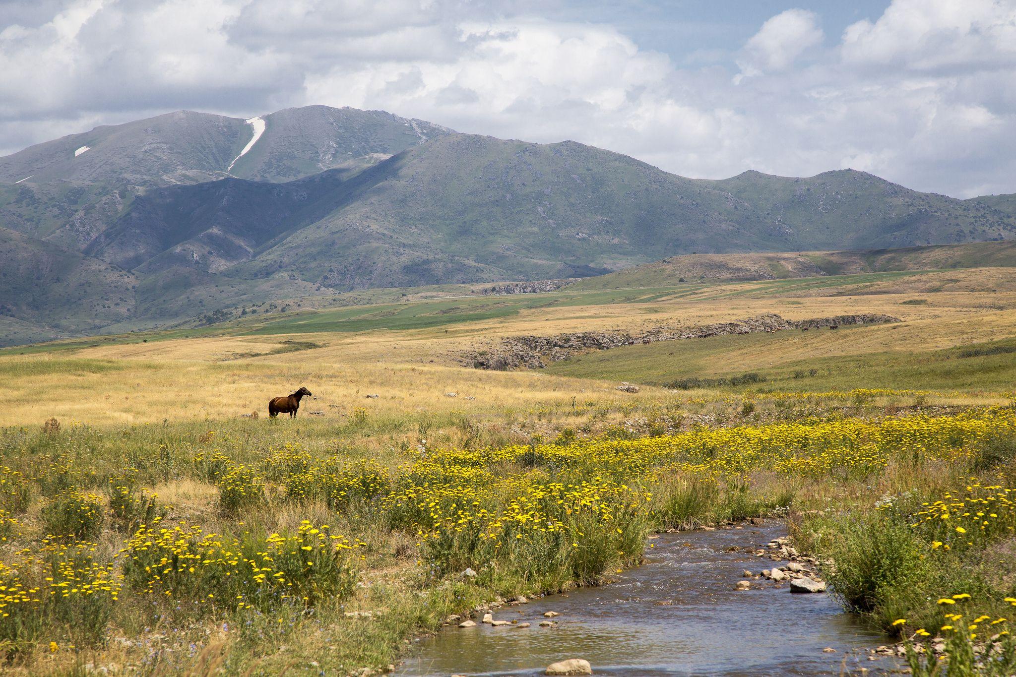 https://flic.kr/p/fnqZhK   Aksu-Zhabagyly Nature Reserve, Kazakhstan   Along the Kyrgyz and Uzbek borders east of Shymkent.