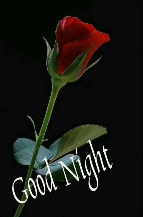 Goodnight Images In Marathi For Whatsapp Goodnight Images In Marathi For Whatsapp Free Down Good Night Love Images Good Night Love Quotes Good Night Blessings