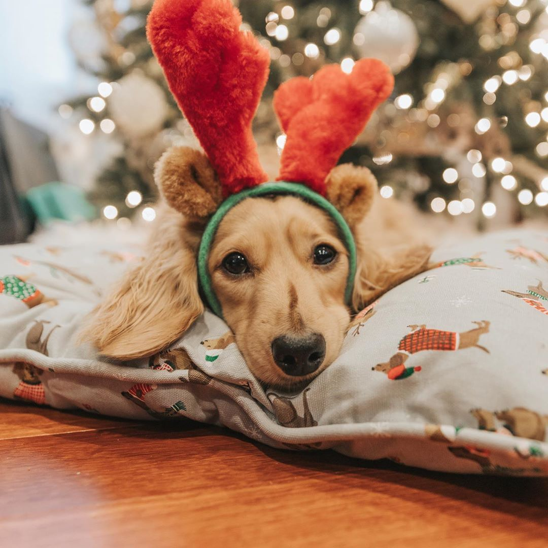 Christmas Sausage Dog Dachshund Love Weenie Dogs Mini Dachshund