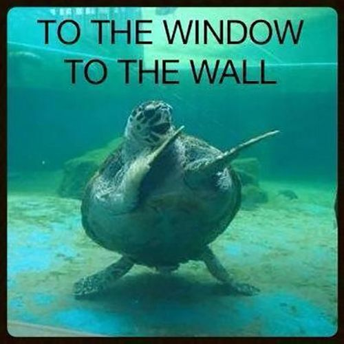 Dancing Turtle Funny Photo Gallery Turtle Fish Pet