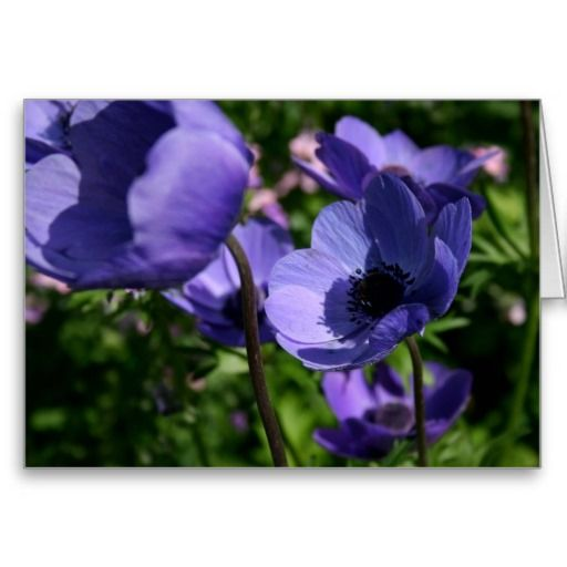 Blue Anemones Greeting Card