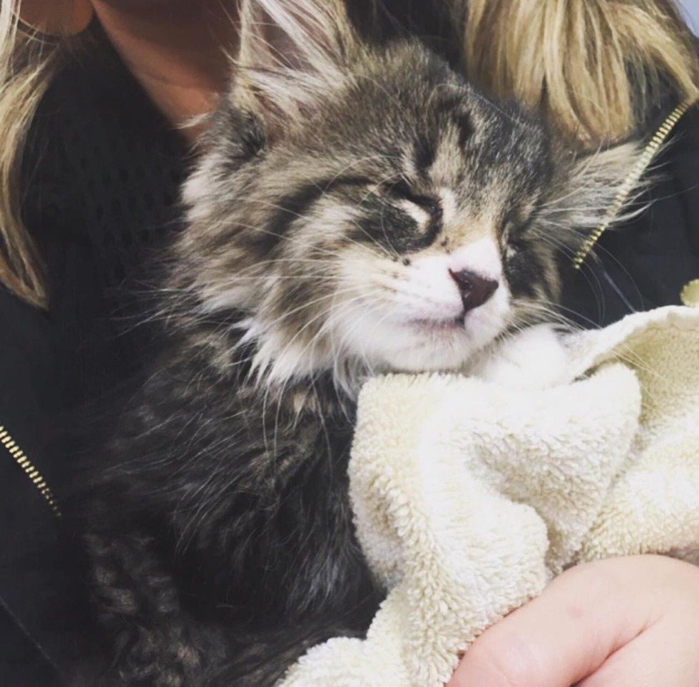 A Tiny 5 Week Old Kitten Who Was Born With Tiny Eyes And Weak Hindquarters Was So Happy To Be Saved That He Couldn T Stop Cat Sanctuary Crazy Cats Cute Cats