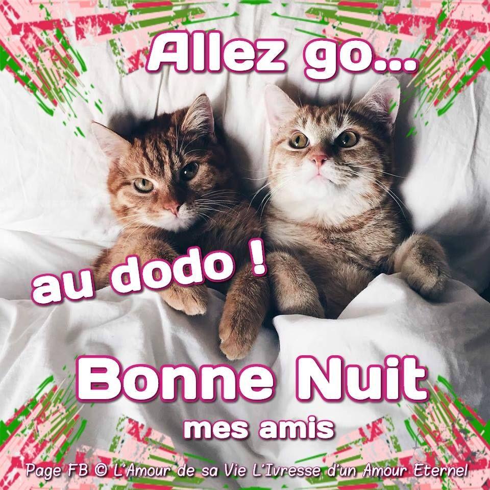 allez go au dodo bonne nuit mes amis bonnenuit chats lit drole humour dormir coucher. Black Bedroom Furniture Sets. Home Design Ideas