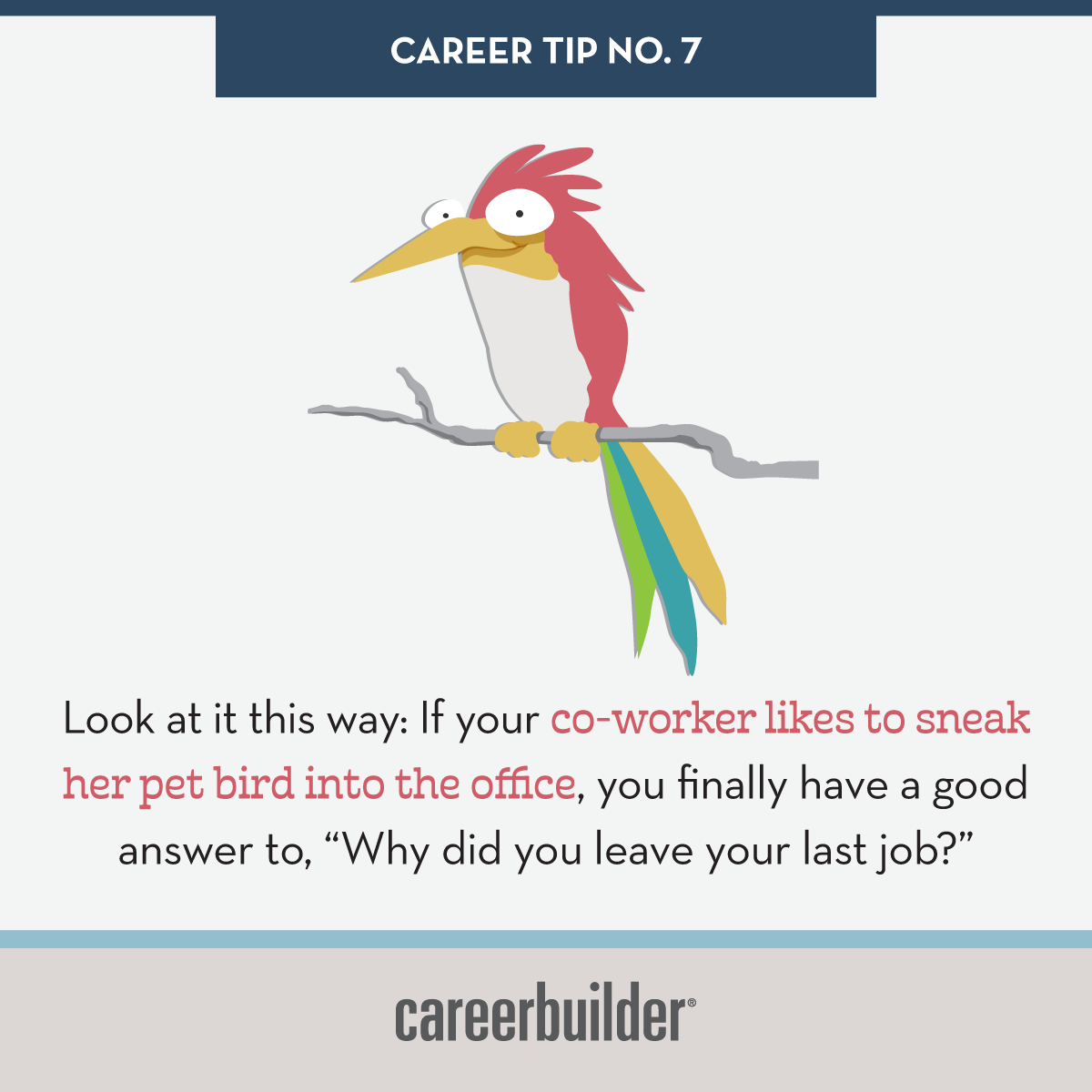 Don T Bring Your Bird To Work Career Development Career Advice