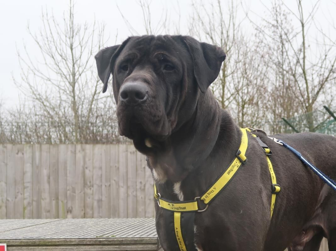 Sosa Dogs Dogs Trust Rescue Dogs