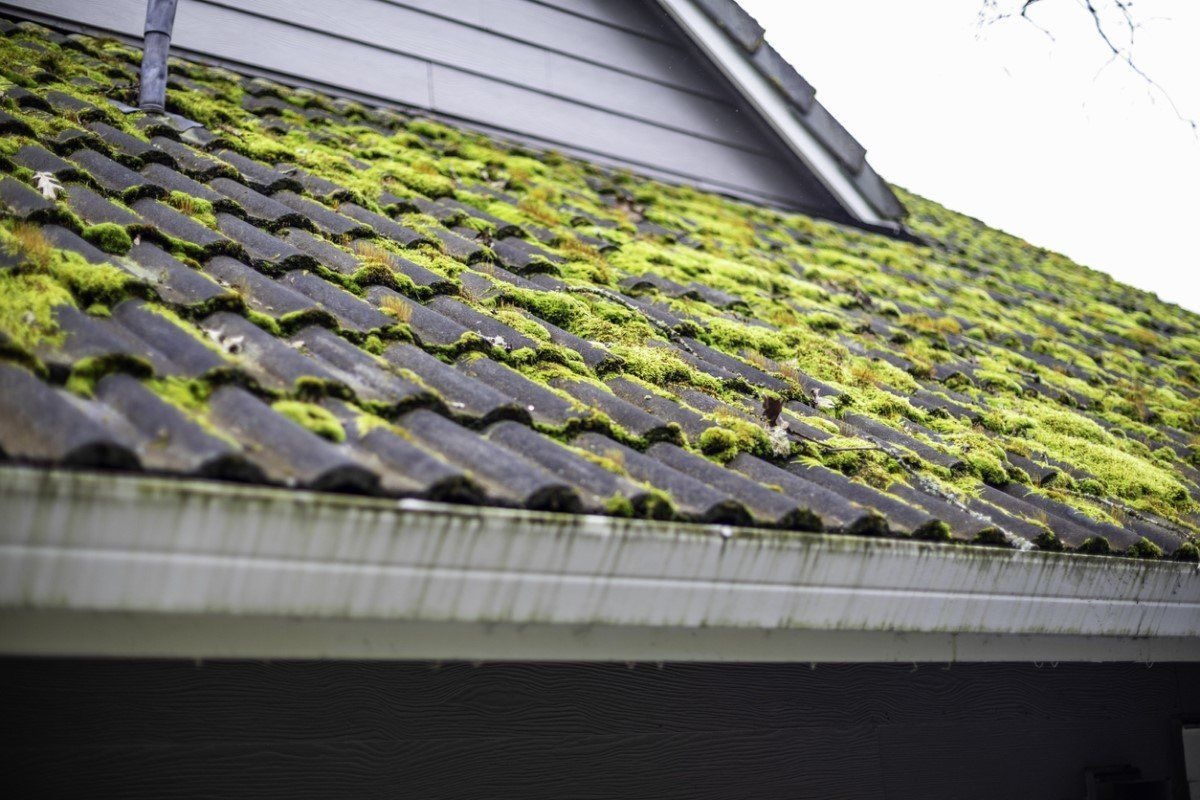 How To Remove Moss From The Roof Roof Shingles Asphalt Roof Shingles Roof Cleaning