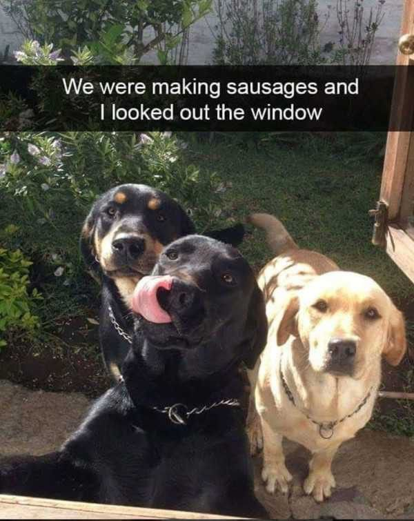 Pin By Ximena Diez On Dogs Funny Animal Pictures Cute Animals Funny Animals