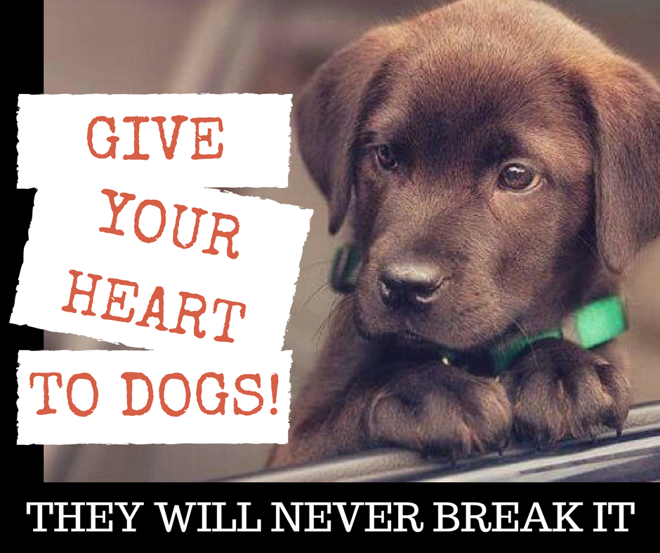 Give Your Heart To Dogs They Will Never Break It Petsworld Puppylove Dogs Dog Doglovers Cute Cuteanimals Dogs Buy Pets Pet Shop