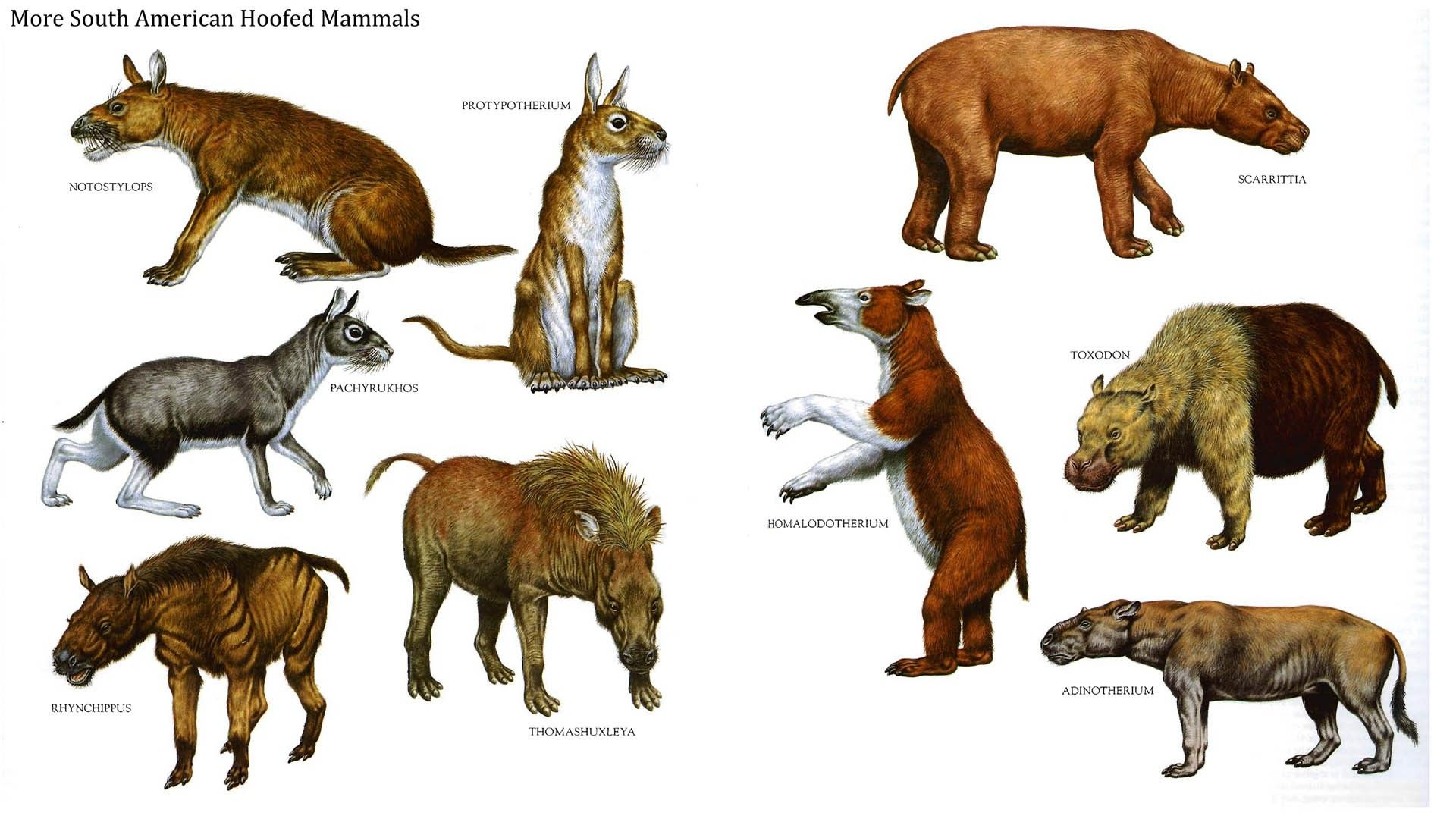 South American hoofed mammels,during the Miocene and