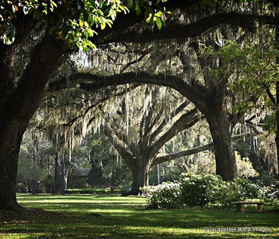 Just a few miles north of Seaside and Seagrove, you can experience the dreamy romance of a bygone era at Eden Gardens State Park. This 161-acre park is a wonderland of ancient moss-draped oaks, punctuated by gorgeous views of Choctawhatchee Bay and Tucker Bayou. With March typically being the peak blooming season, camellias and azaleas still offer dazzling displays from October through May. Eden Gardens is also home to tended rose gardens, a butterfly garden and a reflection pond filled with…